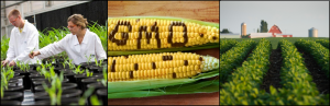 Cover photo for More Than 240 Organizations and Scientific Institutions Support the Safety of GM Crops