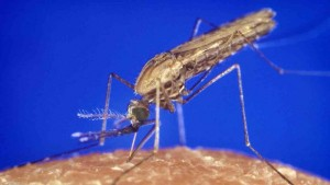 Cover photo for Gene drive workshop shows technology's promise, or peril, remains far off
