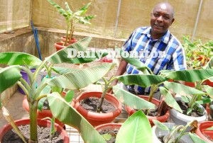 Cover photo for Uganda Starts Trials on Banana Bacterial Wilt Resistant Varieties Created With Genetic Engineering.