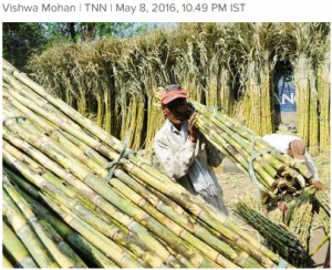 Cover photo for India Looks at GM Sugarcane Option to Ease Water Woes