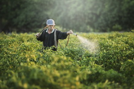 Cover photo for Study Finds That Adoption of Gm Crops Could Improve Health of Chinese Farmers
